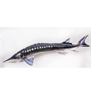 Gaby Fisch Europäischer Stör 115cm Gaby Giant Fish